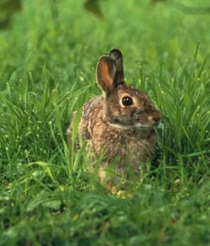 Een konijn zit in een klein hoekje!