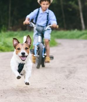Rechtstreekse aanraking met hond niet vereist voor aansprakelijkheid