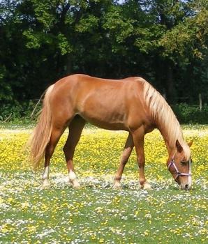 Is de eigenaar van een paard aansprakelijk voor de schade die het dier heeft verricht door een persoon in een weiland omver te lopen?